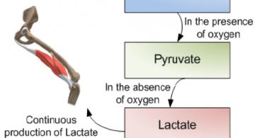 xtra-fit-blog-lactic-acid-1