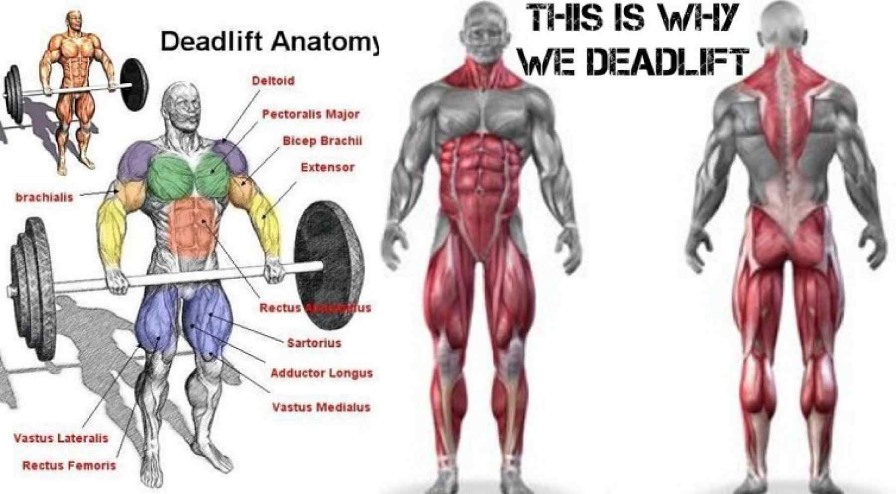 Terrific How To Deadlift Xtra Fit Personal Training In Wandsworth Andrewgaddart Wooden Chair Designs For Living Room Andrewgaddartcom